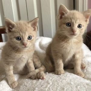 Easily adopt Liam and Murphy at The Stray Connection and be a part of the pet adoption, animal rescue and welfare movement.