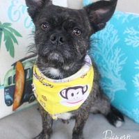 Easily adopt Dingo at :shelter_name and be a part of the pet adoption, animal rescue and welfare movement.