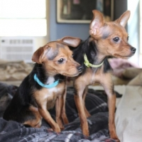 Easily adopt Bonnie & Claudette at  and be a part of the pet adoption, animal rescue and welfare movement.