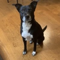Easily adopt Venus D5299 at Wags and Whiskers Animal Rescue of MN and be a part of the pet adoption, animal rescue and welfare movement.