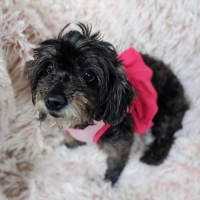 Easily adopt Lulu at Domino Effect Animal Rescue and be a part of the pet adoption, animal rescue and welfare movement.