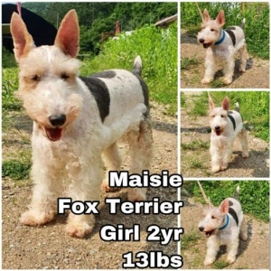 Easily adopt Maisie from Korea at Ginger's pet rescue and be a part of the pet adoption, animal rescue and welfare movement.