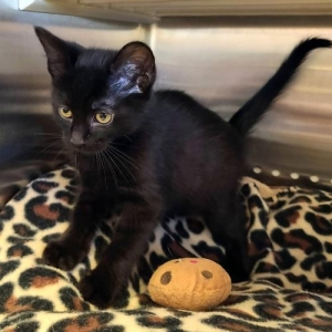 Easily adopt Ladder - PETSEN$E and FREE Gift Package at Loudon County Friends of Animals and be a part of the pet adoption, animal rescue and welfare movement.