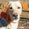 Easily adopt Max at :shelter_name and be a part of the pet adoption, animal rescue and welfare movement.