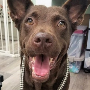 Easily adopt Aretha at Dog Star Rescue and be a part of the pet adoption, animal rescue and welfare movement.