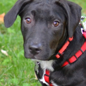 Easily adopt Toby at Happy Dog Rescue and be a part of the pet adoption, animal rescue and welfare movement.