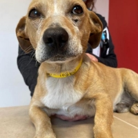 Easily adopt Ollie at Camp Cocker Rescue and be a part of the pet adoption, animal rescue and welfare movement.