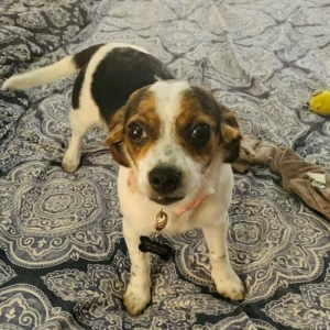 Easily adopt Annie at Animal Rescue Foundation (ARF-IL) and be a part of the pet adoption, animal rescue and welfare movement.