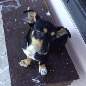 Easily adopt Pepe at Defensa Animal de Rincon and be a part of the pet adoption, animal rescue and welfare movement.