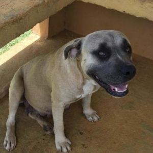 Easily adopt Sweetie at Defensa Animal de Rincon and be a part of the pet adoption, animal rescue and welfare movement.