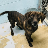 Easily adopt Danby at Hilton Head Humane Association and be a part of the pet adoption, animal rescue and welfare movement.