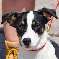 Easily adopt Suga at Animal House Shelter, Inc. and be a part of the pet adoption, animal rescue and welfare movement.