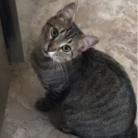 Easily adopt Chrissy at :shelter_name and be a part of the pet adoption, animal rescue and welfare movement.