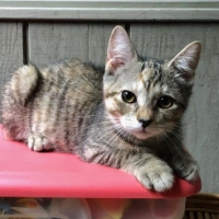 Easily adopt Altman (f) at :shelter_name and be a part of the pet adoption, animal rescue and welfare movement.