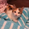 Easily adopt Princess at :shelter_name and be a part of the pet adoption, animal rescue and welfare movement.