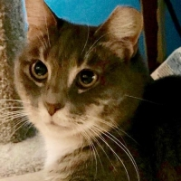 Easily adopt Gigi at :shelter_name and be a part of the pet adoption, animal rescue and welfare movement.