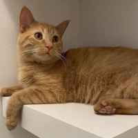 Easily adopt My Darling Clementine: Lovely Orange Teen at :shelter_name and be a part of the pet adoption, animal rescue and welfare movement.