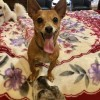 Easily adopt Captain Penn at :shelter_name and be a part of the pet adoption, animal rescue and welfare movement.