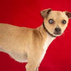 Easily adopt SNICKERS at United Hope for Animals and be a part of the pet adoption, animal rescue and welfare movement.