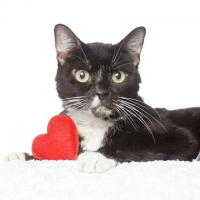 Easily adopt Funny Tux at No Kill Los Angeles and be a part of the pet adoption, animal rescue and welfare movement.