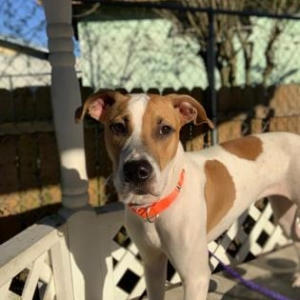 Easily adopt 46115565 Available 11/20 at Adopt Citrus County Animal Shelter Pets and be a part of the pet adoption, animal rescue and welfare movement.