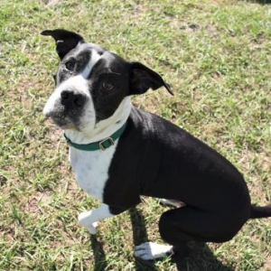 Easily adopt 46109377 Available 11/20 at Adopt Citrus County Animal Shelter Pets and be a part of the pet adoption, animal rescue and welfare movement.