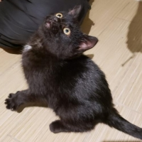 Easily adopt Salem at Rescue Angels and be a part of the pet adoption, animal rescue and welfare movement.