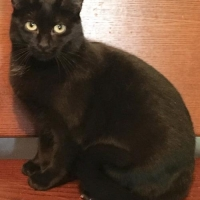 Easily adopt Sekhmet at Rescue Angels and be a part of the pet adoption, animal rescue and welfare movement.