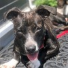 Easily adopt CANDI at Lulu's Rescue and be a part of the pet adoption, animal rescue and welfare movement.