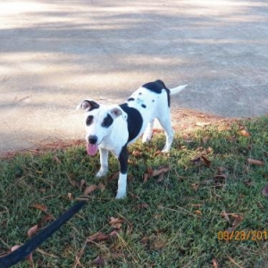 Easily adopt Patches at Survivor Tails Animal Rescue and be a part of the pet adoption, animal rescue and welfare movement.