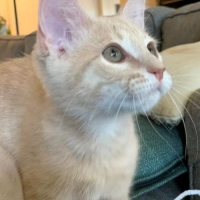 Easily adopt Crash at :shelter_name and be a part of the pet adoption, animal rescue and welfare movement.