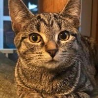 Easily adopt Nala at Loving Care Cat Rescue and be a part of the pet adoption, animal rescue and welfare movement.