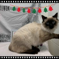 Easily adopt Rubik - Not at the Shelter at :shelter_name and be a part of the pet adoption, animal rescue and welfare movement.