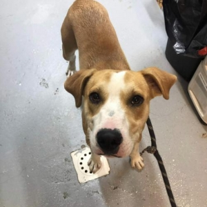 Easily adopt Tommy at Washington Area Animal Adoption Group and be a part of the pet adoption, animal rescue and welfare movement.