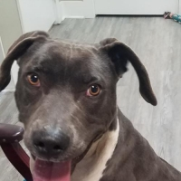 Easily adopt HOPE - $95 (See Videos) at :shelter_name and be a part of the pet adoption, animal rescue and welfare movement.