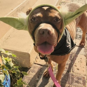 Easily adopt Rose at Swamp Haven Rescue, Inc. and be a part of the pet adoption, animal rescue and welfare movement.