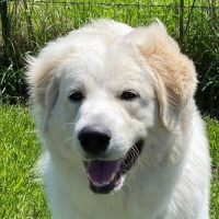 Easily adopt Rocky at :shelter_name and be a part of the pet adoption, animal rescue and welfare movement.