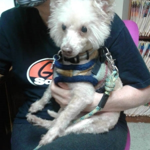 Easily adopt Miles at LEADER OF THE RESCUE PACK and be a part of the pet adoption, animal rescue and welfare movement.