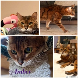 Easily adopt Amber at Lifeline Oro Valley Animal Rescue and be a part of the pet adoption, animal rescue and welfare movement.