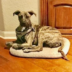 Easily adopt Rocky at Tejas Rescued Pet Adoptions and be a part of the pet adoption, animal rescue and welfare movement.