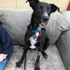 Easily adopt Parker at :shelter_name and be a part of the pet adoption, animal rescue and welfare movement.