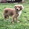 Easily adopt Irina TX at :shelter_name and be a part of the pet adoption, animal rescue and welfare movement.