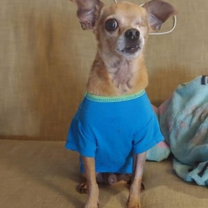 Easily adopt Captain Jack at Northstar Pet Rescue and be a part of the pet adoption, animal rescue and welfare movement.