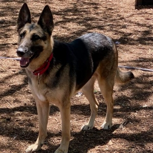 Easily adopt Chloe at Charming Pet Rescue and be a part of the pet adoption, animal rescue and welfare movement.