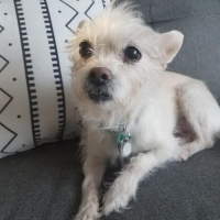Easily adopt Midge at :shelter_name and be a part of the pet adoption, animal rescue and welfare movement.