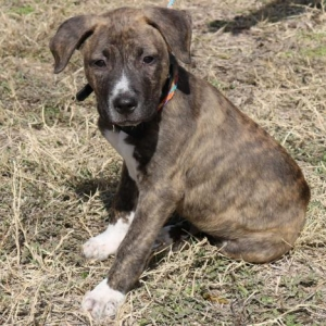 Easily adopt Zane at Cowboy Capital Pet Assistance League and be a part of the pet adoption, animal rescue and welfare movement.