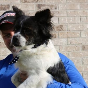 Easily adopt Bear at Cowboy Capital Pet Assistance League and be a part of the pet adoption, animal rescue and welfare movement.