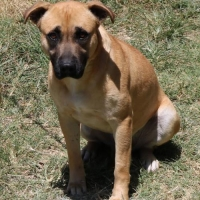 Easily adopt Hank at :shelter_name and be a part of the pet adoption, animal rescue and welfare movement.