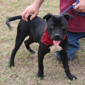 Easily adopt Max at Cowboy Capital Pet Assistance League and be a part of the pet adoption, animal rescue and welfare movement.