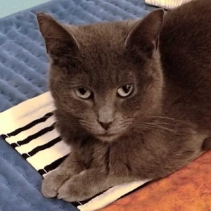 Easily adopt Luna at Kitten Rescue and be a part of the pet adoption, animal rescue and welfare movement.